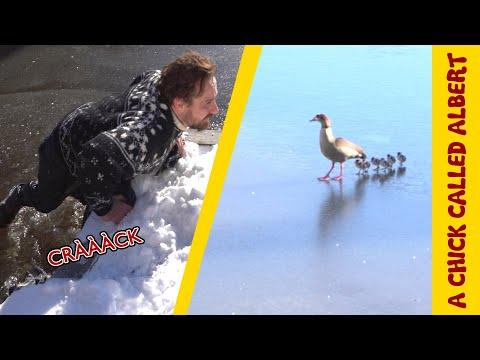 Bird family tragedy turns into thrilling Rescue from the cold ice #Video