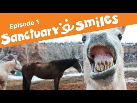 Happiness is dog driving a car, laughing horse and adventure cat in Sanctuary Smiles Episode 1