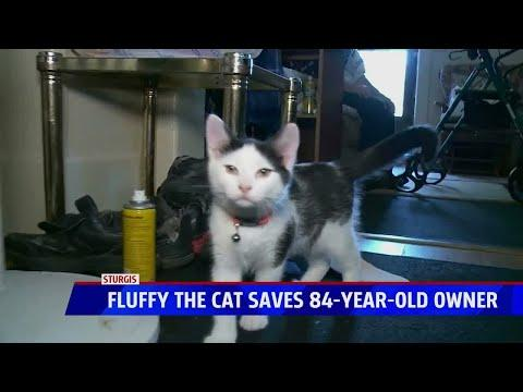 Cat saves man's life after fall video