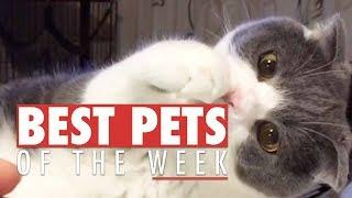 Best Pets of the Week Compilation | September 2017