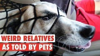 Your Weird Relatives As Told By Pets