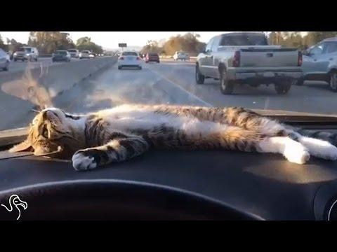 Dashboard Cat Knows What Sunny Days Are For