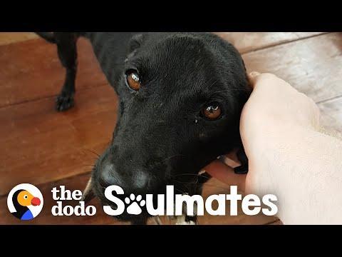 Guy Saves Starving Dog On Deserted Island Video