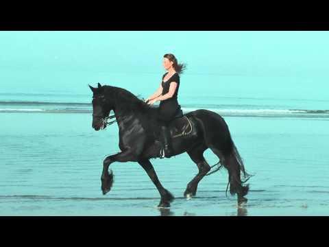 Friesian Horse Fenna