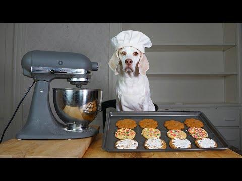Dog Bakes Favorite Cookies Recipes Video! Chef Dog Maymo Makes Sugar, Peanut Butter & Oatmeal Cookie