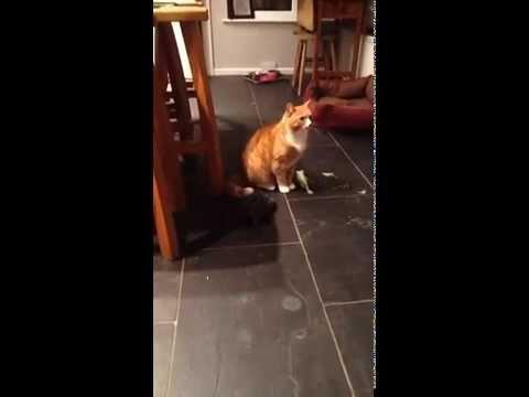 Angry Tortoise Doesn't Like Fred The Cat.
