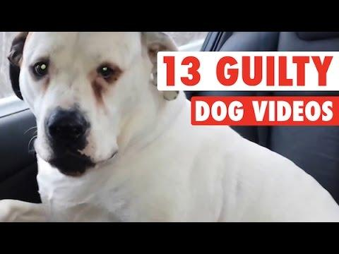 Guilty Dogs Who Are Sorry ( Some Not So Sorry )