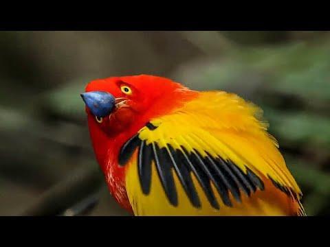 Unbelievable Bird Behaviours #Video