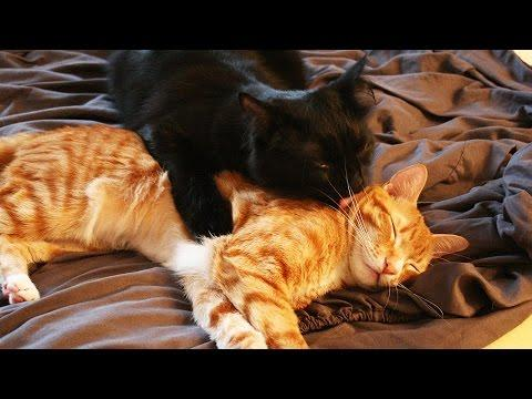 Brotherly Love - Cole & Marmalade