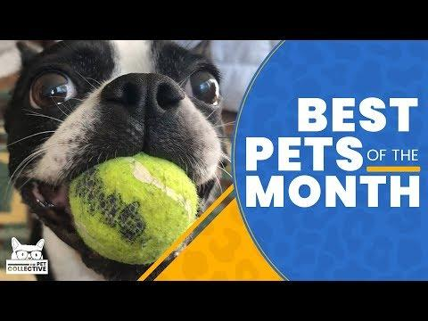 Best Pets Of The Month  | July 2019