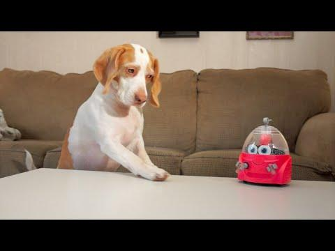 Dog Vs. Robot: Cute Dog Maymo