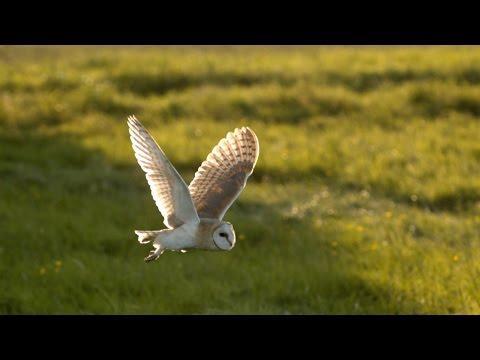 The Secrets Behind An Owl's Slow Flight
