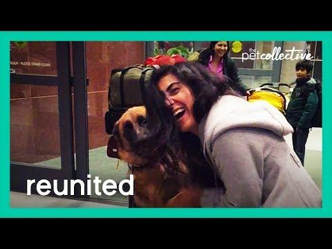 Pets Reunited with their Parents Video! | The Pet Collective