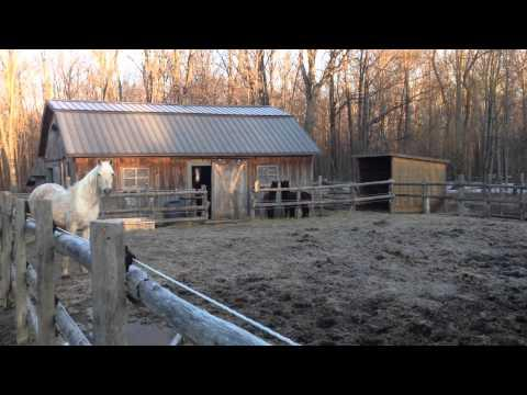 Clydesdale after getting in trouble video.