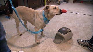 """Watch This Service-Dog-In-Training Learn The """"Touch"""" Command"""