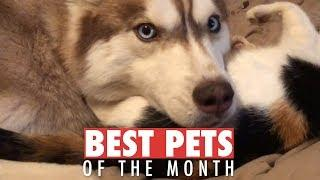 Best Pets of the Month | January 2018