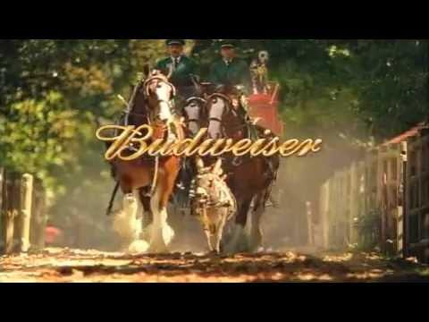 Bud Clyde Commercials 2 - Turtle Ranch