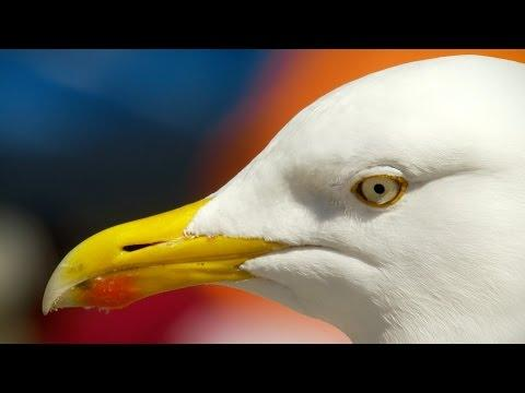 Seagull Will Steal Your Sandwich
