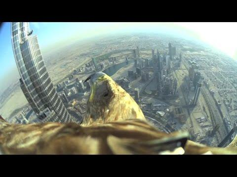 World Record Eagle Flight From Birds Eye View!
