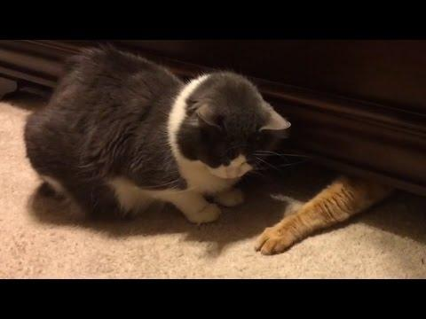 Cats Stealing Stuff - Compilation