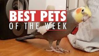 Best Pets of The Week | September 2017 Week 2