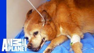 Dr. Jeff Gets Dog's Heart Beating Again | Dr. Jeff: Rocky Mountain Vet