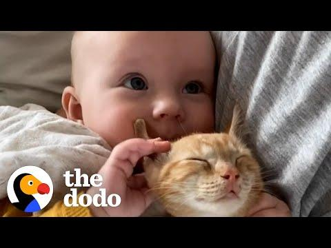 Baby Girl And Her Kitten Brother Are Completely Inseparable #Video