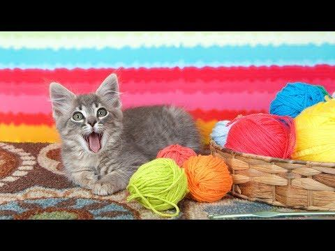 Funny Cats and Kittens Playing with Yarn - Funny Cat Videos