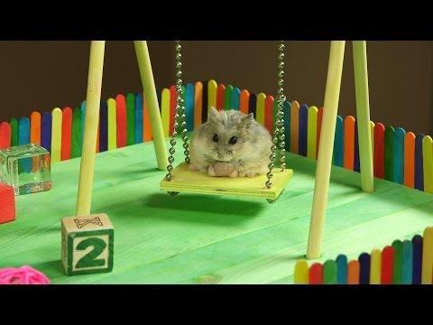 Tiny Hamster In A Tiny Playground