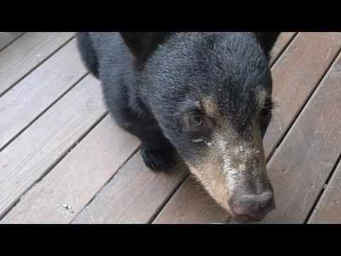 Bear Cubs Milo and Luca — Bolder Every Day #Video