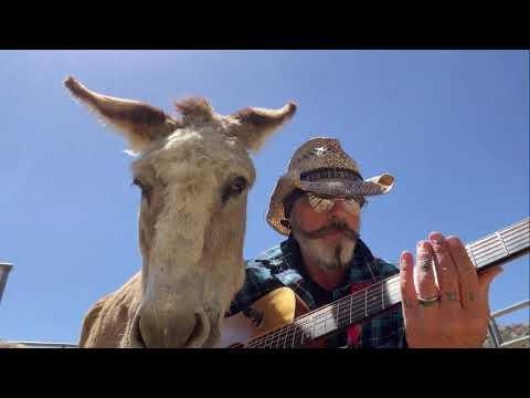 Donkey Named Lilly Drunk with Blues. Most Alert Donkey. Donkey Loves Live Music #Video