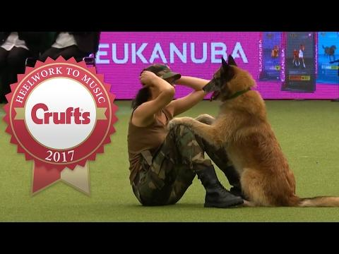 Amazing Dog Performs CPR, Squats And Press Ups In Heelwork To Music Routine