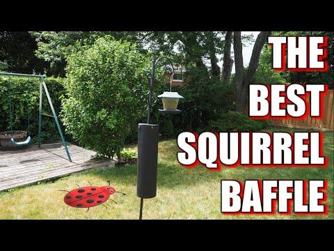 New + Improved Squirrel Baffle 2020!!!  #Video