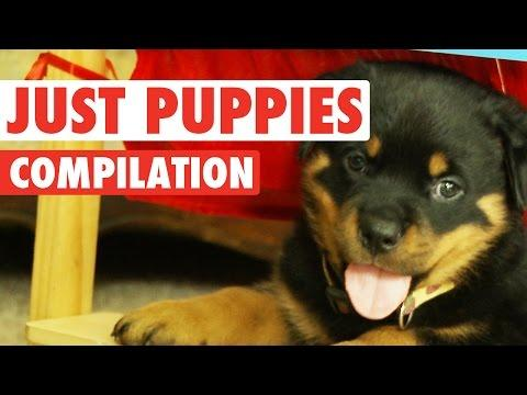 Just Puppies || Cute Puppy Compilation