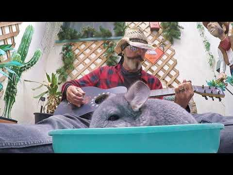 Did You Ever Take a Dust Bath to Music? #Video
