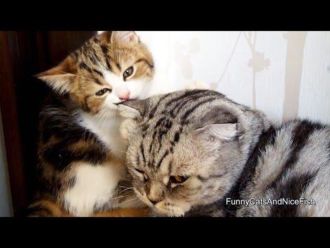 Kitten And Cat Gives Love To Each Other And Falls Asleep