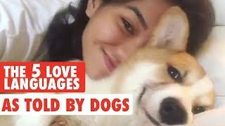 The Five Love Languages As Told By Pets