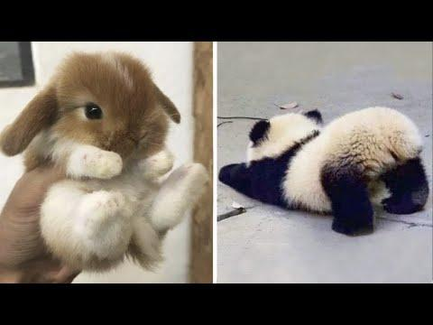 Cutest baby animals Videos Compilation Cute moment of the Animals - Cutest Animals #31