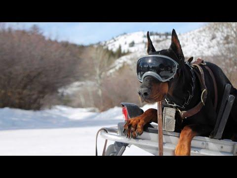 Protective Dog Goggles Are A Hit With Rescue Services