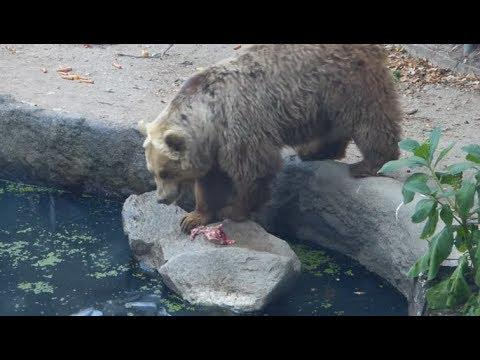 Bear Saves Bird From Drowning. Your Daily Dose Of Internet