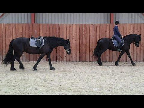 First train, after that we have some fun with the Friesian horses.
