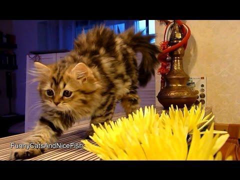 Kittens Gardeners | Too Cute