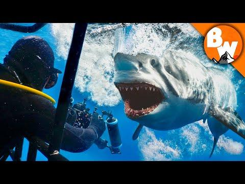 Entering Kill Zone with Great White Sharks!