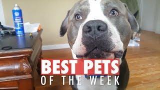 Best Pets of the Week   July 2018 Week 1