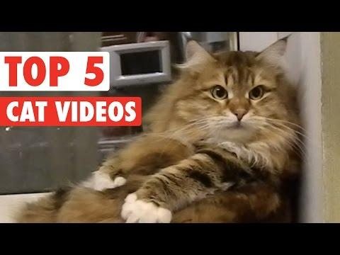 Top 5 Amazing Cats Compilation