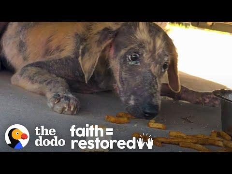 Abandoned Puppy Found Under Truck Fights So Hard To Get Better. Video.