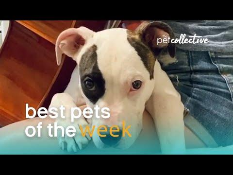 Music Loving Dog | Best Pets of the Week Video