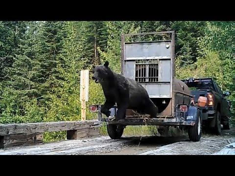 Very aggressive Bear release.
