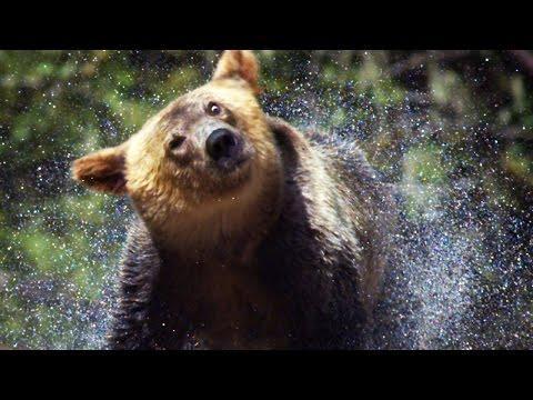 13 Amazing Slow Motion Animals - Earth Unplugged