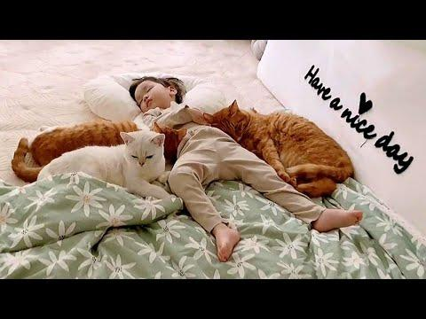 Adopted Cats Guarding and Sleeping with Their Little Human Video